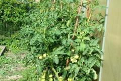 aus unserem Garten