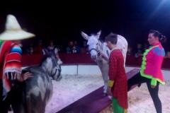 Circus Rambazamba 6